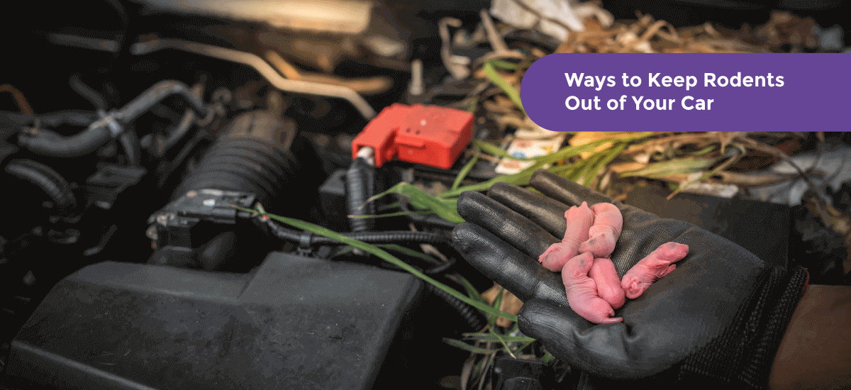 How to Keep Rats, Mice and Other Rodents Away From Your Car - Acko