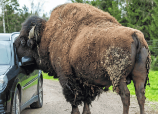 Does Your Car Insurance Cover Animal Attack?